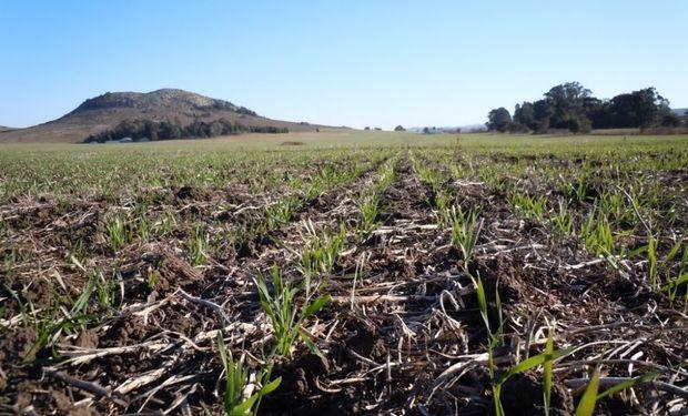 A 20 días de comenzar la siembra, con lluvias recientes y la cosecha en vías de terminar, la demanda de insumos comenzó a tomar fuerza.