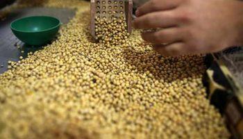 Ejercicio de simulación: qué pasaría si exportáramos solo soja sin procesar
