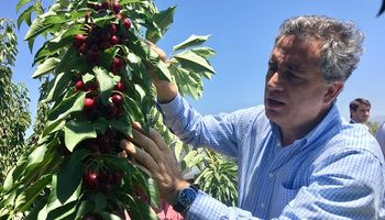 """Etchevehere: """"Argentina está en el top 10 en exportación de cerezas"""""""