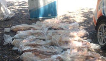Senasa destruyó 19 costillares en Choele Choel
