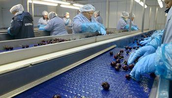 Todo listo para realizar el primer envío de cerezas a China
