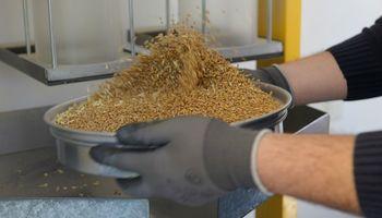 Clausuran molinos harineros de trigo por no instalar los controladores electrónicos