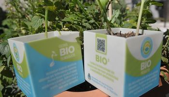 Argentina apuesta a la biomasa renovable con una estrategia a 4 años