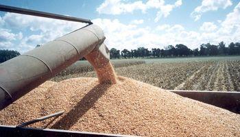 Granos y hacienda: se lanzó el monitor de precios de mercados agropecuarios