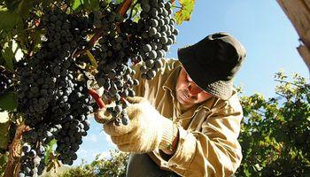 Se exportarán uvas y cerezas argentinas a Tailandia