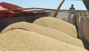 Suspenden a 159 exportadores de granos por no informar sus operaciones