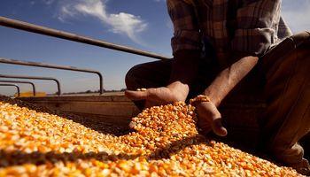 Senasa abrió la inscripción al registro de exportadores de granos a China