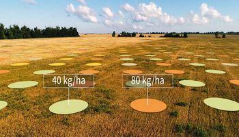 Digitalización del agro: acuerdo entre Yara e IBM para ofrecer soluciones a productores