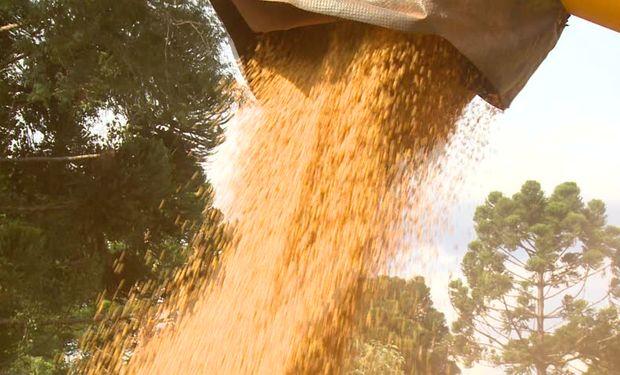 Chicago: los futuros de soja cerraron con importantes alzas impulsados por compras técnicas.