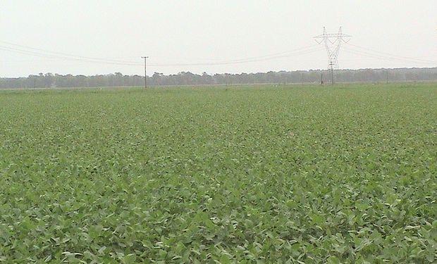 Argentina es el quinto país con mayor tierra cultivable disponible