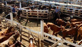 Una demanda selectiva marca el escenario sobre los mercados ganaderos