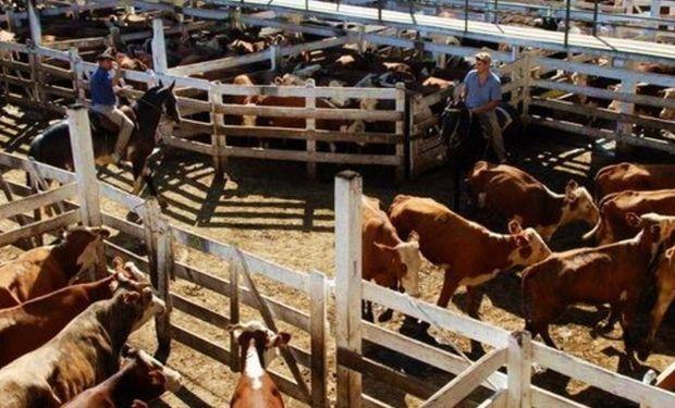 Plaza selectiva en los mercados ganaderos.