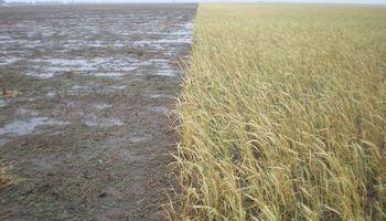 Aseguran que los cultivos de cobertura son una solución a más de 20 conflictos de manejo
