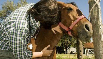 Senasa: veterinarios y técnicos deberán reacreditarse en programas sanitarios de forma online