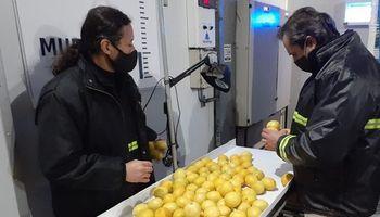 Argentina abrió un nuevo mercado: exporta por primera vez limones a China