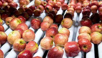 Peras y manzanas argentinas recuperan su presencia en Brasil tras una reducción de polilla del manzano