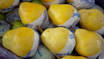 Las peras argentinas conquistan el mercado ruso y las exportaciones aumentaron un 30 %
