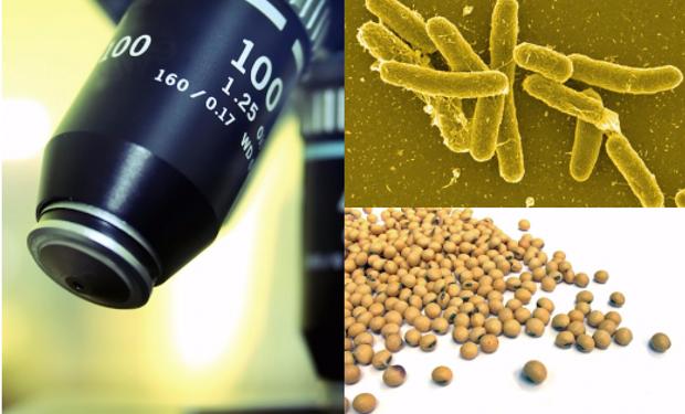 La Salmonella es una de las cuatro principales causas de enfermedades diarreicas.