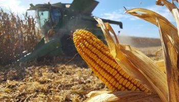 Estimación récord: el Gobierno espera 145 millones de toneladas de la actual cosecha