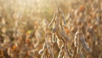 Soja: las nuevas tecnologías permiten buenas prácticas agrícolas y convivencia