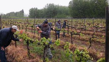 INTA con acento francés: desarrollaron un vino espumante patagónico
