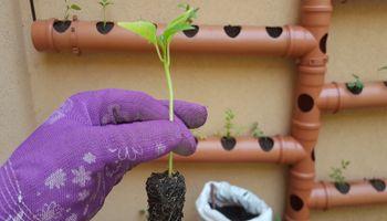 Primavera: el momento ideal para revivir la huerta