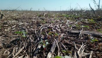 Aseguran que planificar el uso de herbicidas permite ahorrar hasta un 40%
