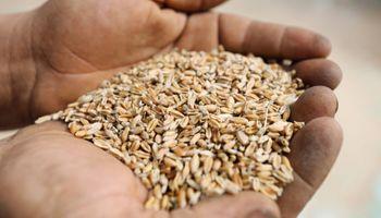 La soja y el trigo cerraron la semana con bajas en el mercado de Chicago