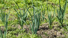 """""""Bioinsumos Agropecuarios"""": en qué consiste el programa que creó el Gobierno para el sector"""