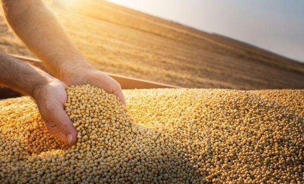 CBOT: el mercado cerró con bajas para la soja y el maíz luego del informe del USDA