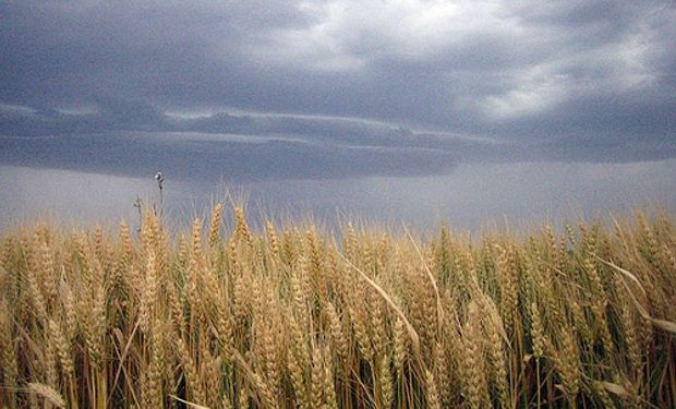 Por problemas con el trigo argentino, Brasil apunta al autoabastecimiento