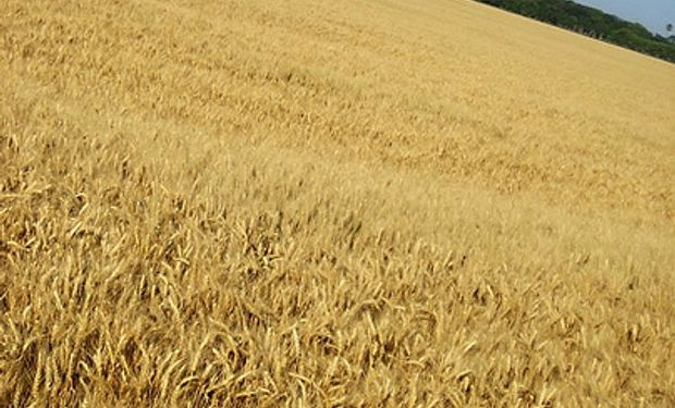 La sequía presiona precio de la harina
