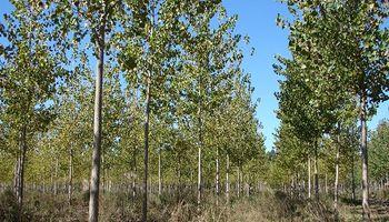 China redujo los aranceles a la madera argentina y se presenta como una oportunidad para el sector