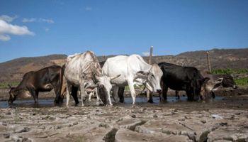 Sistema de Información sobre Sequías: buscan monitorear el desastre natural más dañino