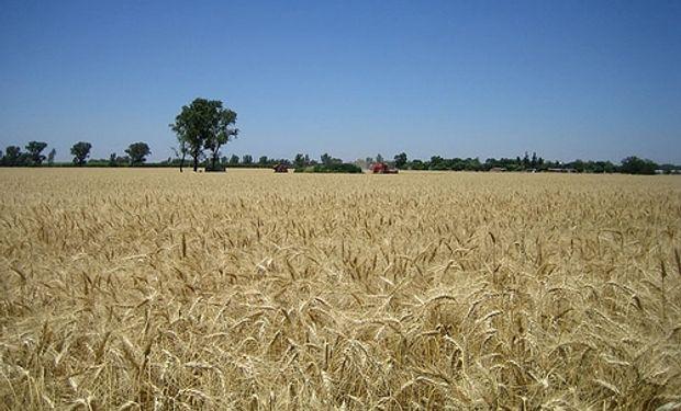 La sequía complica a los cultivos en Estados Unidos