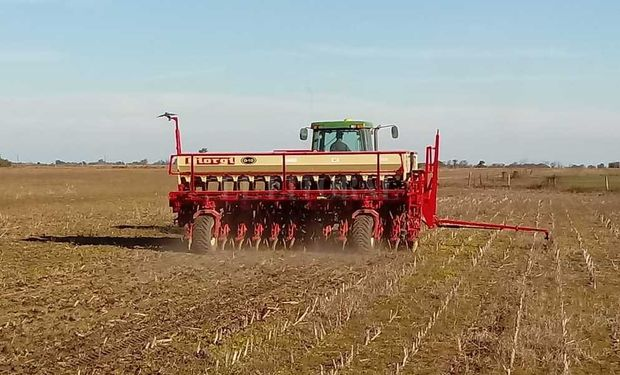 El área de trigo será la más alta de los últimos 18 años.