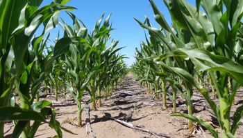 La relación de los granos contra los fertilizantes se ubica por debajo del promedio histórico