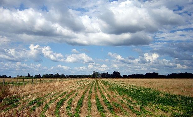 Clima seco favorece siembra de soja en Argentina
