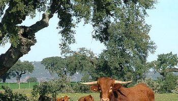 Sembrando ganadería
