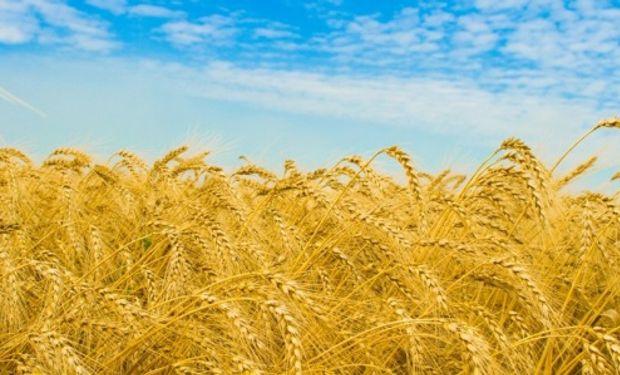 El trigo  mostró una fuerte recuperación en las ventas externas con un 58,8% de crecimiento.