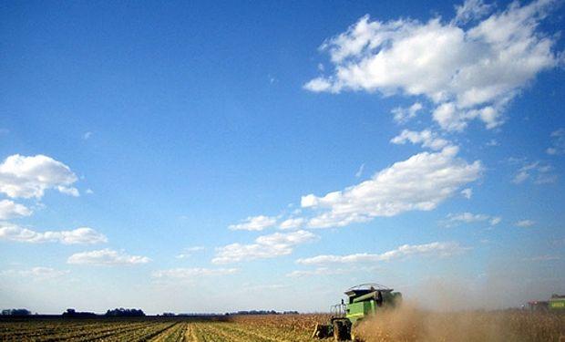 Los alquileres de campos caen un 40% por la baja en los precios
