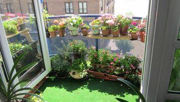 Un poco de verde: tips para crear un jardín en tu casa