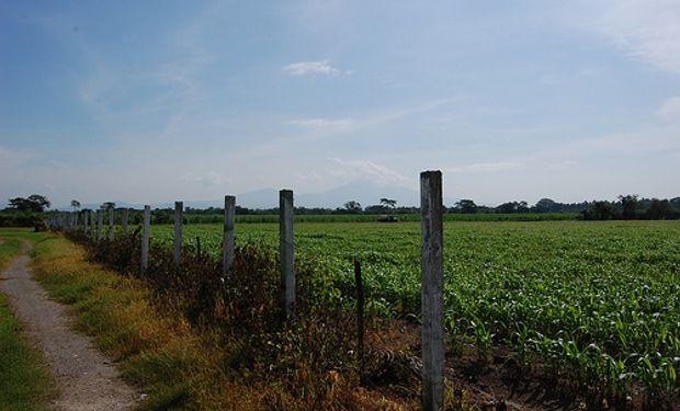 Entre Ríos produjo más maíz y soja