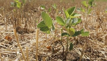 La campaña agrícola de Sancor Seguros avanza con importantes novedades