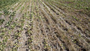Rechazan usar las retenciones a la soja para armar un fondo contra riesgos agrícolas