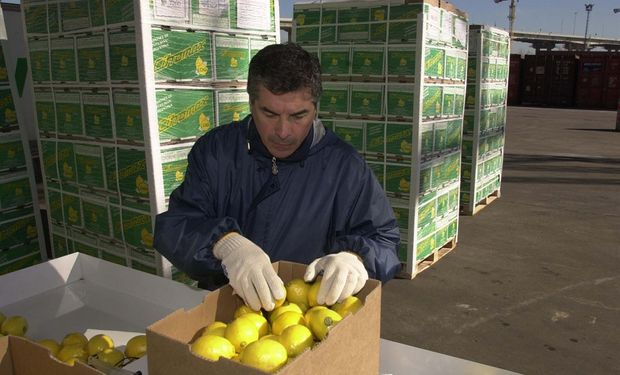 La Argentina es el primer productor mundial de limones, con un volumen de aproximadamente 1,5 millones de toneladas anuales.