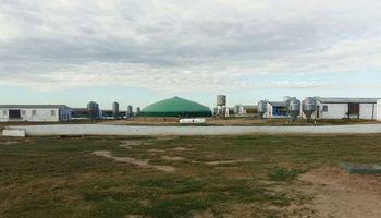 Una granja porcina de Córdoba ahorra 70% de energía con la producción de biogás