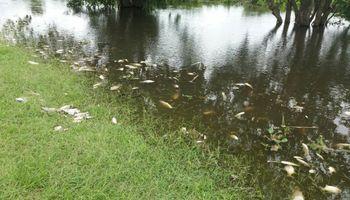 Explicaciones por la mortandad de peces en ríos santafesinos
