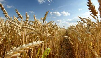 Egipto no reducirá las importaciones de trigo