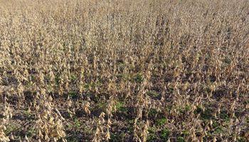 La cosecha le hace frente a la coyuntura y comienza a cobrar impulso en el norte